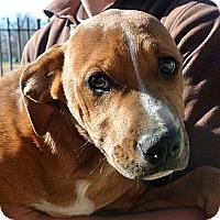Adopt A Pet :: River - white settlment, TX