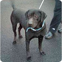 Adopt A Pet :: Clancey - Seattle, WA