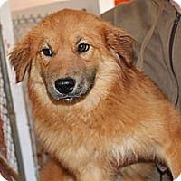 Adopt A Pet :: Strawberry Cheesecake - Kittery, ME