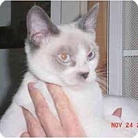 Adopt A Pet :: Bruiser - Pendleton, OR