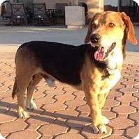 Adopt A Pet :: Burke - Phoenix, AZ