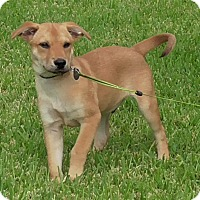 Adopt A Pet :: Chip - Kingwood, TX