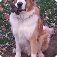 Adopt A Pet :: Jake Lee - Courtesy Posting - Tipp City, OH