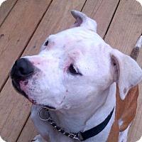 Adopt A Pet :: Jewels - Kimberton, PA