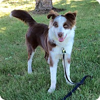 Adopt A Pet :: Cooper - Midwest (WI, IL, MN), WI
