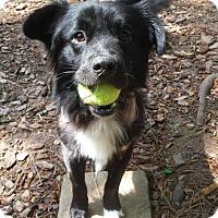 Adopt A Pet :: Harry - Alpharetta, GA