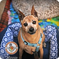 Adopt A Pet :: Minnie - Oceanside, CA