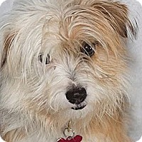 Adopt A Pet :: Webster - Cumberland, MD