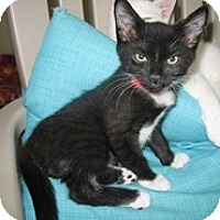 Adopt A Pet :: Fisk - Shelton, WA