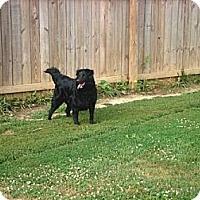 Adopt A Pet :: Kaydee - Irvington, KY