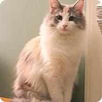 Adopt A Pet :: Penny - Arlington, VA