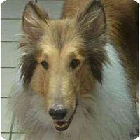 Adopt A Pet :: Alfie - Gardena, CA
