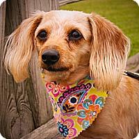 Adopt A Pet :: Mimzee - Princeton, KY