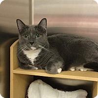 Adopt A Pet :: Sniffles - Colmar, PA