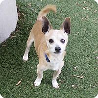 Adopt A Pet :: SPONSORED: Max - Oakland, CA