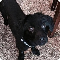 Adopt A Pet :: Spencer - Meridian, ID