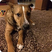Boxer Mix Dog for adoption in Racine, Wisconsin - Landon