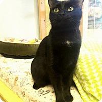 Adopt A Pet :: Dahlia - Leonardtown, MD