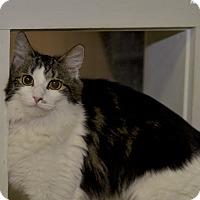Adopt A Pet :: Belle - Medina, OH