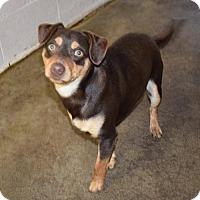 Adopt A Pet :: Dooley - Fairmont, WV