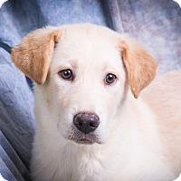 Adopt A Pet :: TARYN - Anna, IL