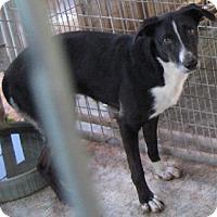 Adopt A Pet :: Precious - Tahlequah, OK