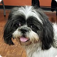 Adopt A Pet :: Rascal - Available Soon - Farmington Hills, MI