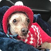 Adopt A Pet :: Mr. Burns - Bucks County, PA