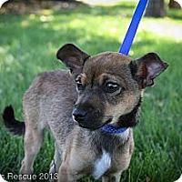Adopt A Pet :: grassHopper - Broomfield, CO