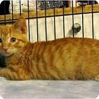 Adopt A Pet :: Dodger - Colmar, PA
