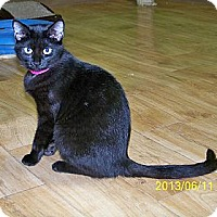 Adopt A Pet :: Whitney - Dover, OH