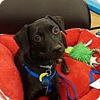 Adopt A Pet :: Zuni - Golden Valley, AZ