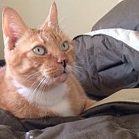 Adopt A Pet :: Zinnia - Waller, TX