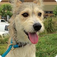 Adopt A Pet :: Hanson - Mission Viejo, CA