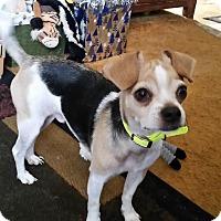 Adopt A Pet :: Bouncer - Loveland, OH