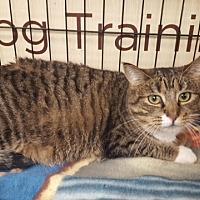 Adopt A Pet :: Petra (MP) - Little Falls, NJ