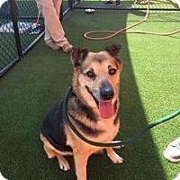 Adopt A Pet :: Samanatha - Danbury, CT