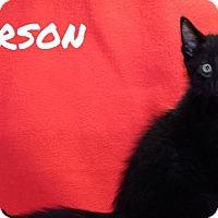 Adopt A Pet :: Carson - Batesville, AR