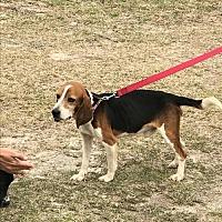 Adopt A Pet :: Sir Walter - Glen St Mary, FL