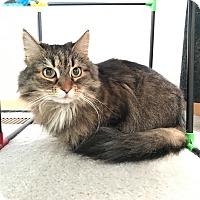 Adopt A Pet :: Tazzi - Barrington Hills, IL