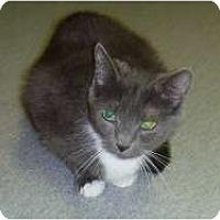 Adopt A Pet :: Alice - Hamburg, NY