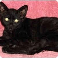 Adopt A Pet :: Sam Spade - Colmar, PA