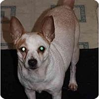 Adopt A Pet :: Cherry - Toronto/Etobicoke/GTA, ON