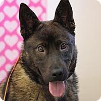 Adopt A Pet :: Koda - Roosevelt, UT