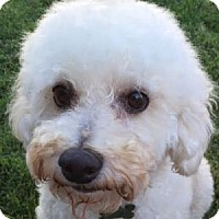 Adopt A Pet :: Dunnigan - La Costa, CA