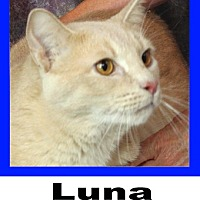 Adopt A Pet :: Luna - Wichita Falls, TX