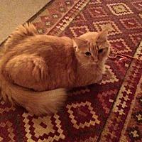 Adopt A Pet :: Gypsy - Garwood, NJ