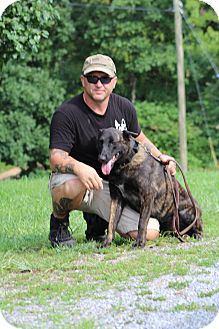 Dutch Shepherd Dog for adoption in Greeneville, Tennessee - Uhli