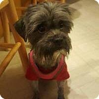 Adopt A Pet :: Missy - Marlton, NJ