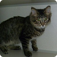 Adopt A Pet :: Puffy Boy - Hamburg, NY